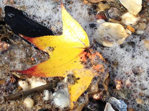 fall leaf on beach