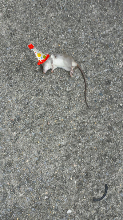 party hat rat