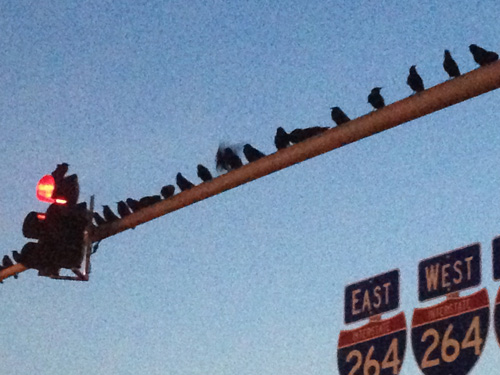 scary crows