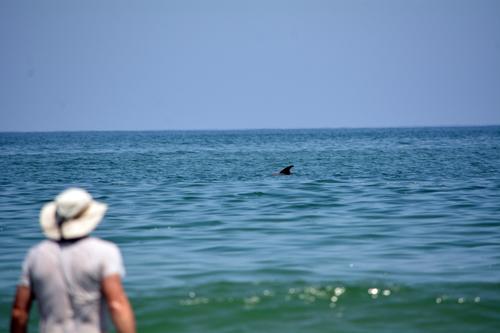 shark in NC