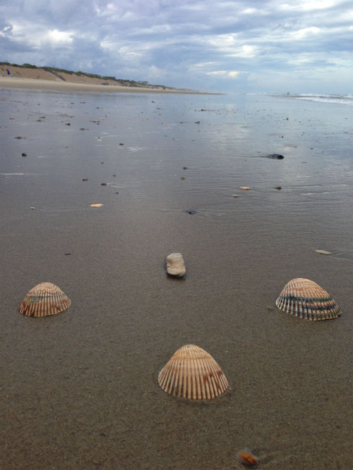 shells in north south east west