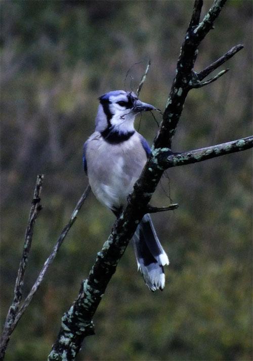 upclose-bird